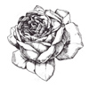 rose-small